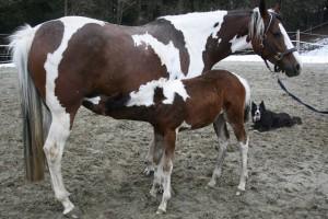 Verschiedene Pferde